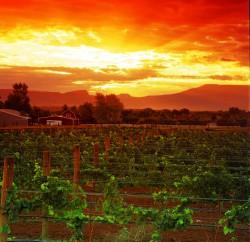 Sunset_over_Grand_Valley_vineyard_SV1Pc2GnI0ln9B2dtuGezsq_cmyk_l
