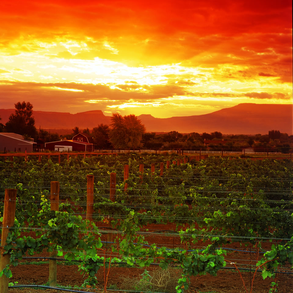 Sunset_over_Grand_Valley_vineyard_SV1Pc2GnI0ln9B2dtuGezsq_cmyk_l
