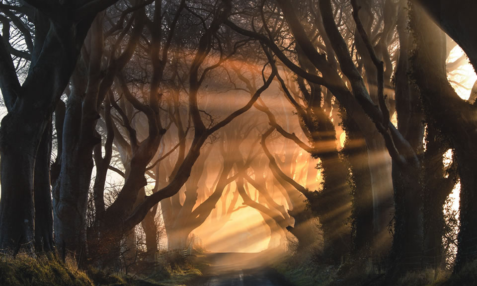 got-NODE-dark-hedges-bg